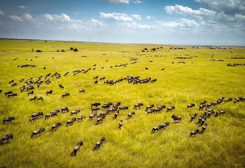 Great wildebeest migration, Serengeti